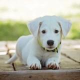 puppy-1903313_1280 (1)square